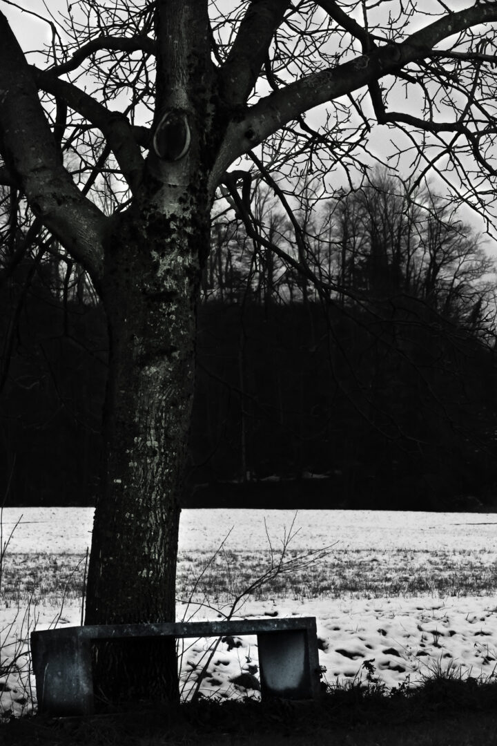 A lonely bench overshadowed by a tree. All this on a snowy and dark day.