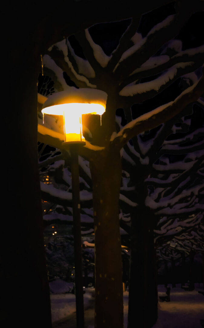 Photo of a lamp-post amidst snowy trees. Shot in winter.